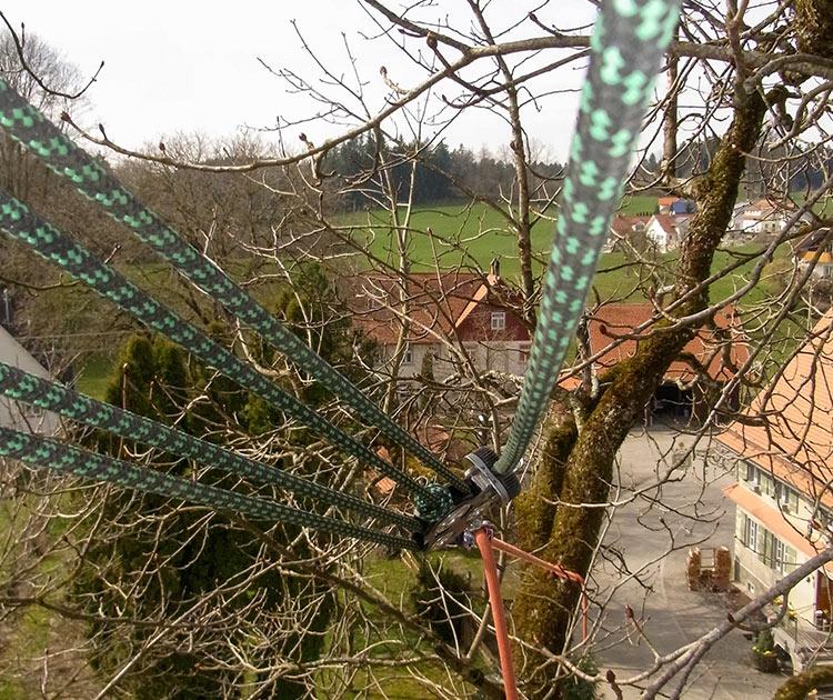 Netzwerk Braun Arboristik Stuttgarter Baumsachverstand